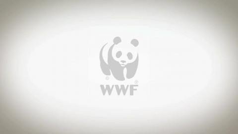 Story Painting für WWF