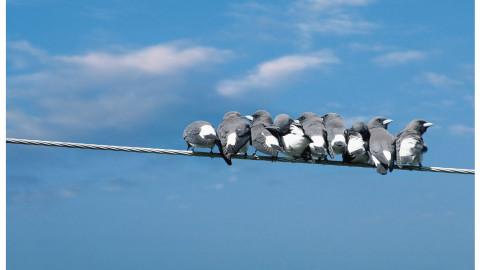 Print Vögel Seite 1