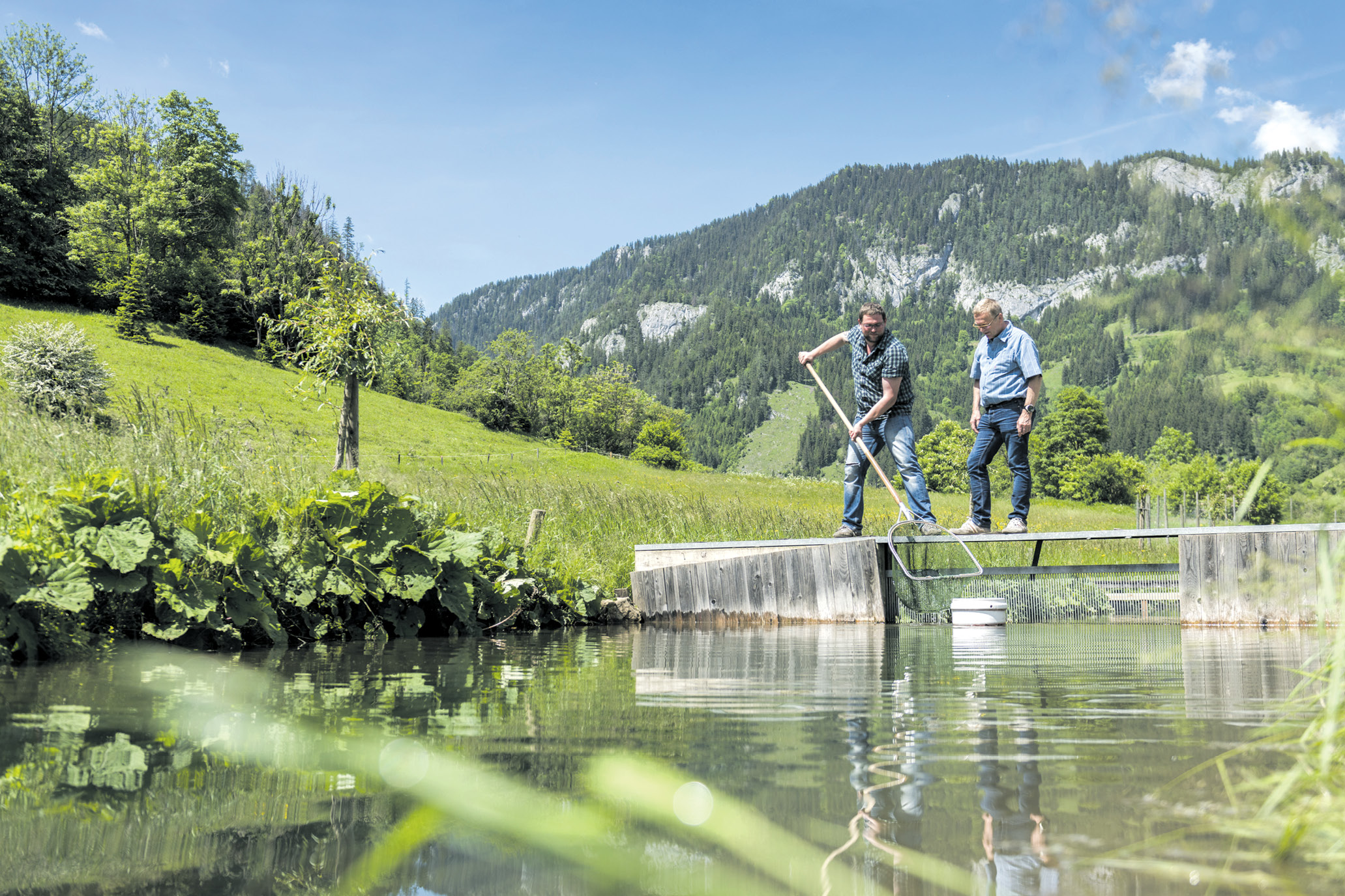 Fitte fische aus mariazell mnews for Fische in teichen