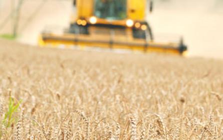 Ukraine bleibt stark im Getreideexport