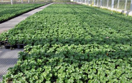 Grazer Gartenbaufirma mit 140 Mitarbeitern insolvent