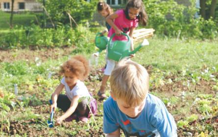 Gemüsebeet statt Schulbank