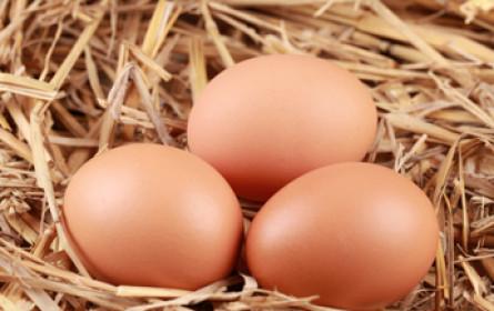 Bayern-Ei darf wieder Eier verkaufen