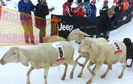radio:works lässt die Schafe los