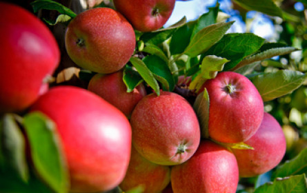 Harte Zeiten für Obsthändler