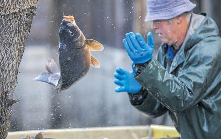 Fischers Fritz fischt nachhaltiger
