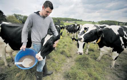 Milch ist teurer, Bauer bleibt in Not