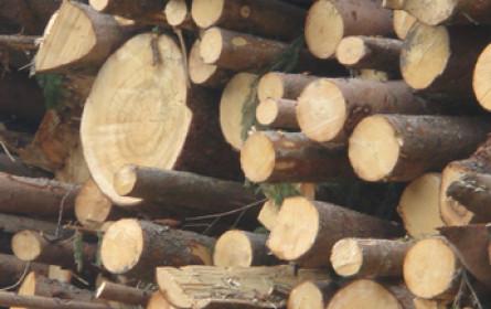 Forstindustrie im Wandel
