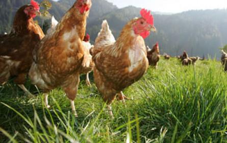 Kennzeichnung für verarbeitete Eier