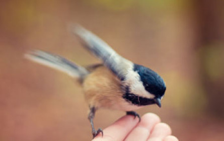 bellaflora rettet Wildvögel