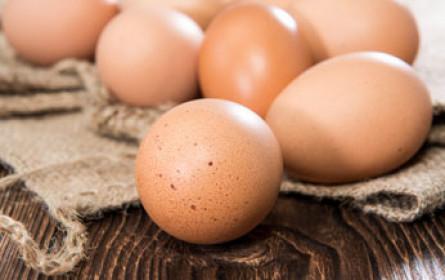 Welt-Eier-Tag von Fipronil-Skandal überschattet
