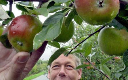 Apfelernte in OÖ war heuer durchschnittlich