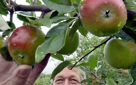Supermärkte erhöhen Apfelsaftpreise