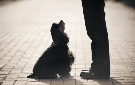 Buchstäblich auf den Hund gekommen