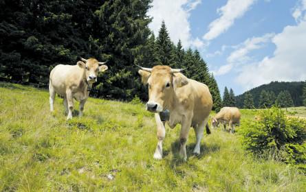 Spar sagt Ja zur Kuh