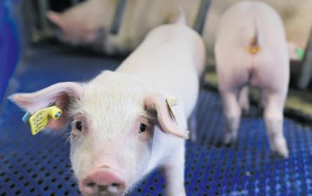 Wanted: Fleisch ohne resistente Keime