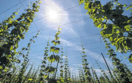 Beim Bier wächst der Umsatz mit der Sonne