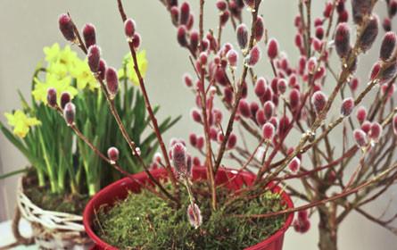 bellaflora begrüßt den Frühling in pink