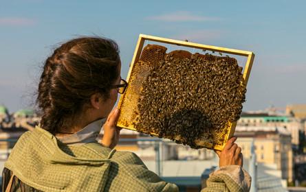 Honigbienen lieben die Stadt