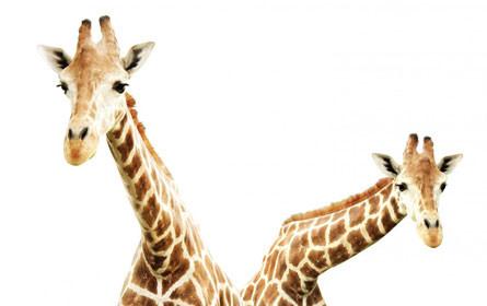 Was wir vom Hals der Giraffen lernen können – mnews – medianet.at