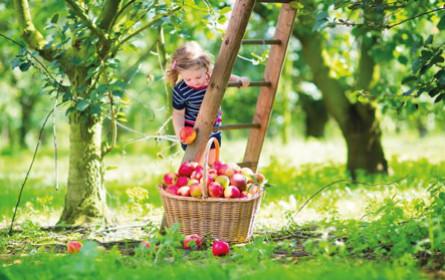 Lidl Österreich: zweiter Nachhaltigkeitsbericht ist da