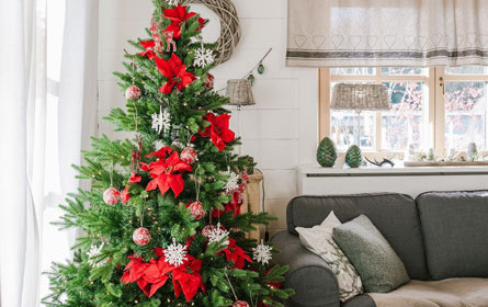 Von Hand aufgezogen: Im Wohnzimmer der Weihnachtsbäume