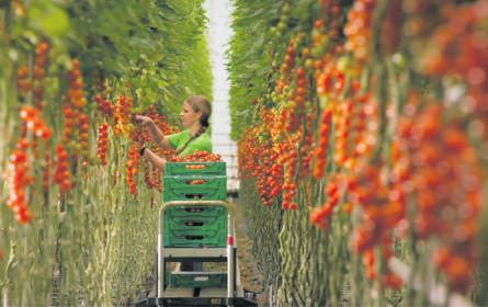 Spar landet mit Frutura einen Tomaten-Coup