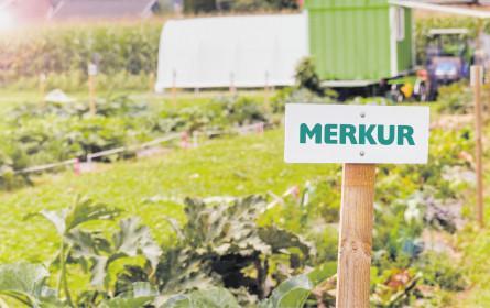 Merkur am Acker