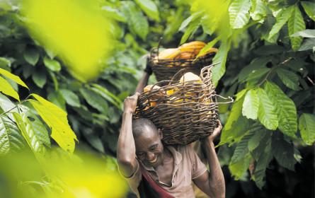 Fruchtbarer Boden für den fairen Handel
