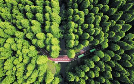 Grün ist nicht mehr fad und ungeliebt