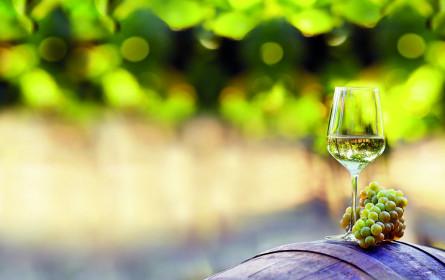 Sélection 2019: Heimische Weinvielfalt bei Lidl Österreich