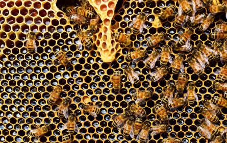 Weltbienentag: Warum der Honiglieferant so einmalig ist