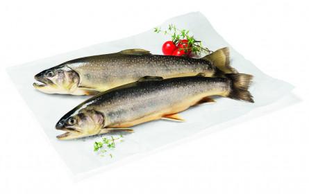 WWF empfiehlt regionalen Bio-Fisch zu Weihnachten
