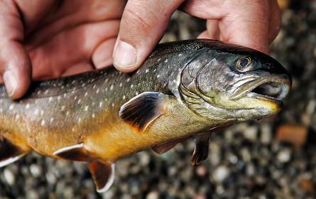 """Heimischer Bio-Fisch hat kleinsten Klima-""""Flossenabdruck"""""""