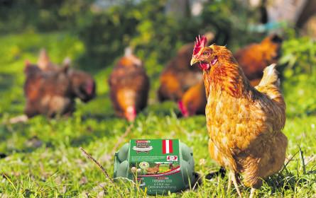 Eier mit Tierwohl-Bonus