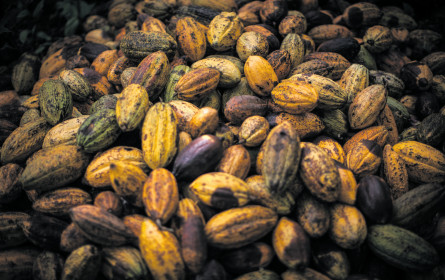 Fairtrade erhöht den Kakaomindestpreis