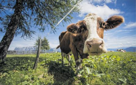 Milchwirtschaft will fairen Green Deal