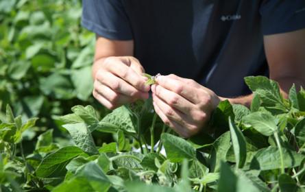 Erstmals über 200.000 Tonnen Soja in Österreich geerntet