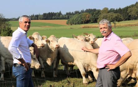 Spar sichert faire Rindfleisch-Preise