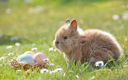 WWF-Empfehlungen für ein nachhaltiges Osterfest