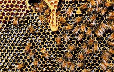 Gemeinsam gegen das Bienensterben