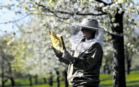 Metro schützt die Bienen