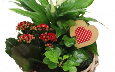 CO2-neutrale Valentinsgrüße: Mit den Fairtrade-Edelrosen zum Hofer-Preis