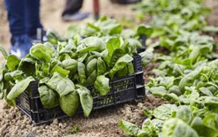 Lidl entwickelt ersten Biodiversitätsstandard für konventionelle Landwirtschaft