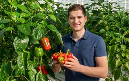 Erstes regionales Gemüse der Saison bei Billa, Merkur, Adeg und Penny