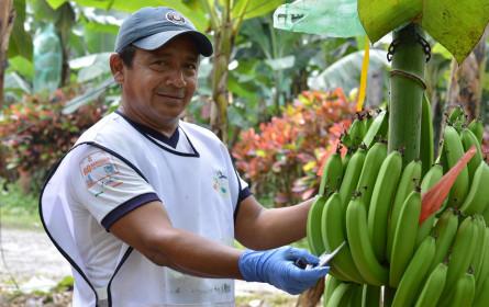 Fairtrade-Grundgehalt für Beschäftigte auf Bananen-Plantagen