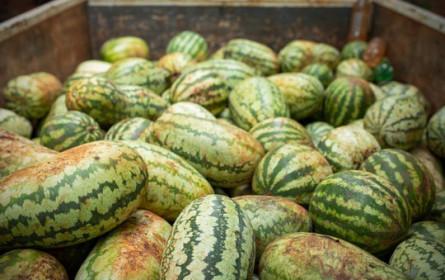 Neuer WWF-Bericht zu Lebensmittelabfällen