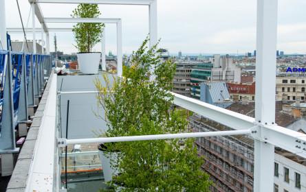 """Ikea: """"Die Bäume kommen"""""""