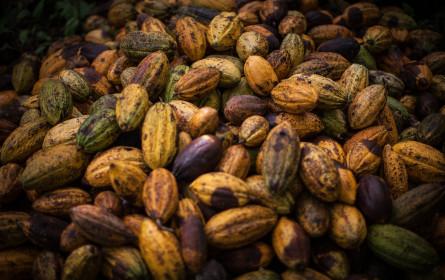 Fairtrade-Bilanz 2020: fairer Handel legt im Krisenjahr zu