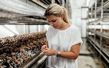 "Spar hat Portobello-Pilze von ""Tiroler Bio Pilze"" aus Thaur neu im Sortiment"